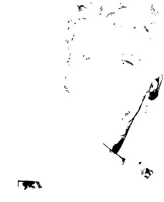4. White inside black areas